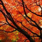 Το Φθινόπωρο